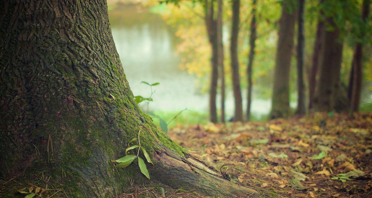 Radice di un albero in un bosco
