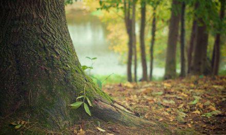 Concimi naturali: per avere delle buone colture biologiche bisogna risalire alla radice