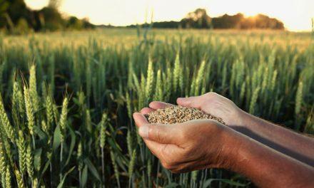 Festival Grano Sano, alla scoperta del grano che fa bene alla salute