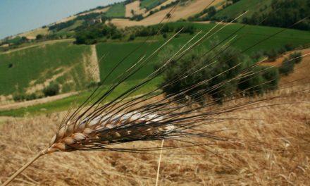 Oltre il concetto di biologico: le tecniche di agricoltura naturale
