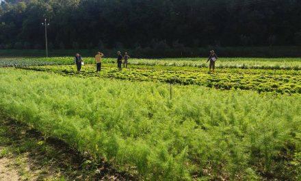 Rocca Madre, un'agricoltura biologica all'insegna della partecipazione