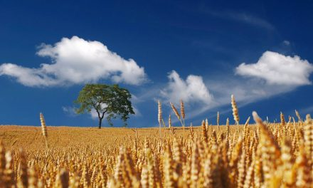 PAC, i tre bandi principali per gli agricoltori marchigiani