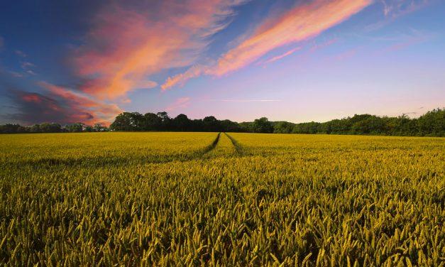 Azienda agricola paesaggio