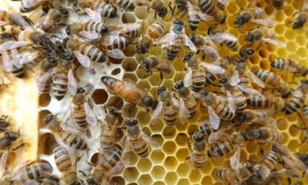 Il segreto del benessere delle api de LaViola risiede nell'arnia marchigiana