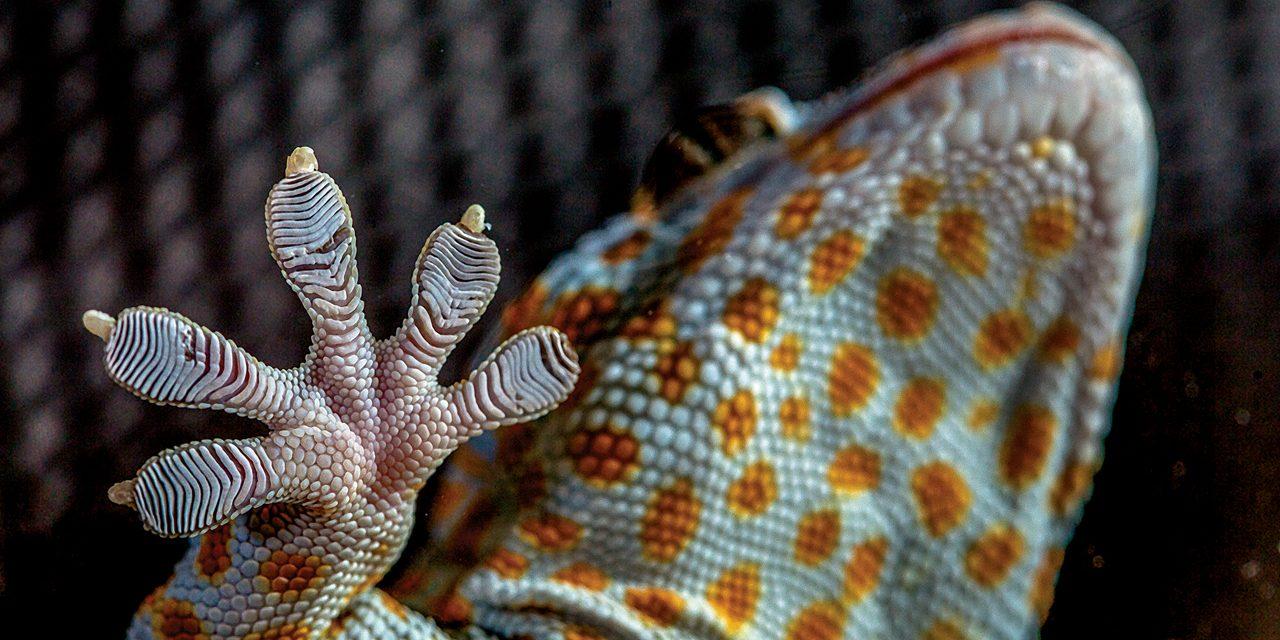 Biomimetica, la tecnologia impara dal genio della natura