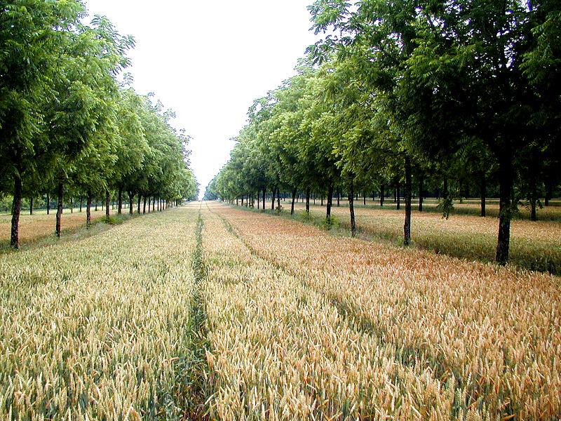 Agroforestazione, un nuovo nome per un sistema benefico che sta tornando attuale