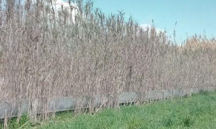 Vivai e aziende senza acqua nella valle del Tronto, Marche Rifiuti Zero fa appello ad autorità per risolvere problema