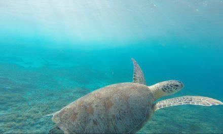Giornata Mondiale degli Oceani, test globale sulla salute degli oceani previsto per il 21 giugno