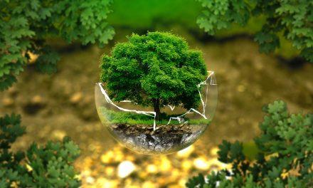 Appignano cerca soggetti amministrativi da impiegare in un progetto ambientale