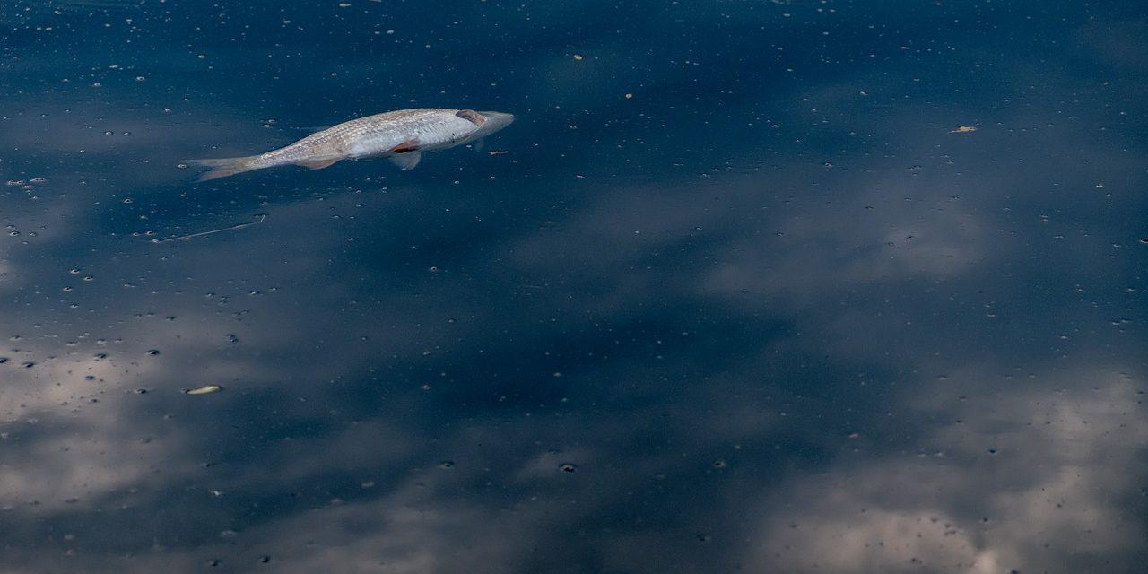 Inquinamento da microplastiche: al via il progetto nel Mare Adriatico