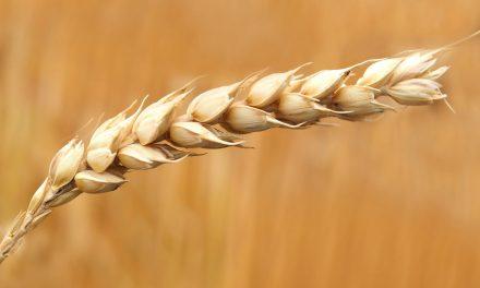 Nuova rivoluzione agricola alle porte, i miscugli salveranno i raccolti dal cambiamento climatico