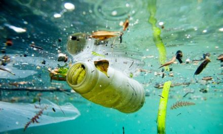 A Catania un progetto-evento per combattere l'emergenza ambientale