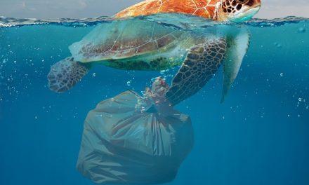 Giornata mondiale senza sacchetti di plastica: intervista a Sabrina Petrucci di Marche a Rifiuti Zero