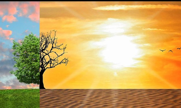 Le conseguenze dei cambiamenti climatici sul settore agricolo in Italia