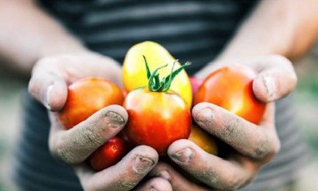 Le Marche e il BIO: azienda agricola Malavolta, agricoltura biologica dal 1995