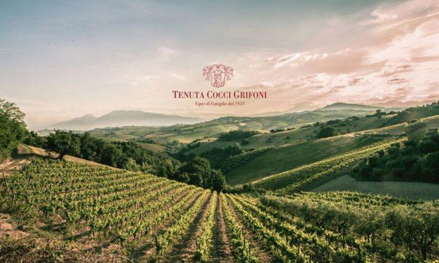 """Tenuta Cocci Grifoni: agricoltura """"etica"""" dal 1933"""