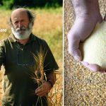 Cooperativa Girolomoni, i precursori del biologico. Intervista a Giovanni Battista Girolomoni
